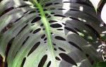 Декоративно-лиственные