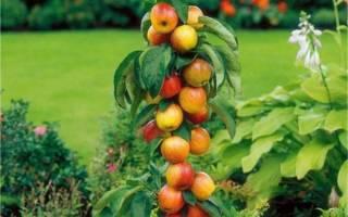 Плодовые деревья и кустарники для сада, колоновидные фруктовые деревья