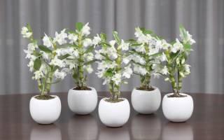 Горшки для орхидей: критерии и варианты выбора