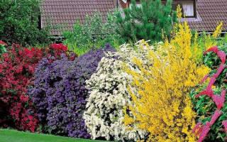 Декоративные кустарники для сада и для дачи
