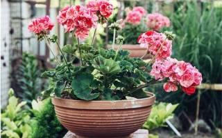 Домашние комнатные цветы цветущие круглый год