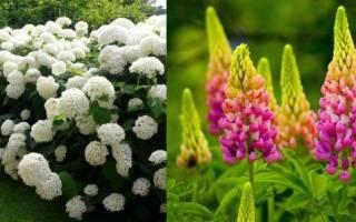 Какой должна быть земля для цветов комнатных — кислая или щелочная