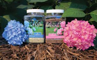 Чем подкормить гортензию — удобрения для роста и пышного цветения в саду