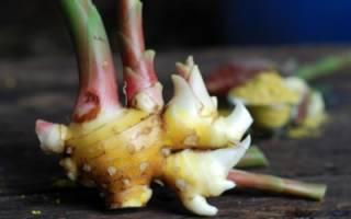 Имбирь — что это за растение и откуда родом