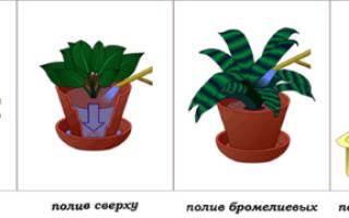 Как часто необходим полив комнатных растений