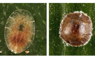 Вредители орхидей — почему появляются и как бороться