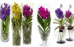 Как обрезать Орхидею до и после цветения