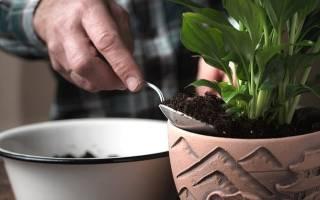 Грунт для спатифиллума — какая земля нужна для цветка