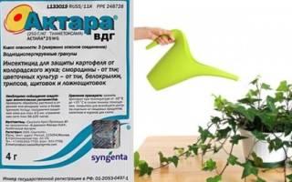 Актара для комнатных растений: инструкция и способы развода